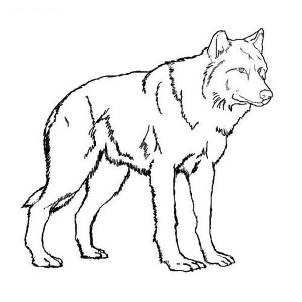 Wolf Coloring Pages Realistic  Collection 19n - To print for your project